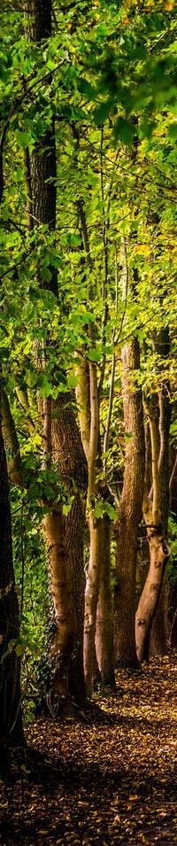 forest sidebar